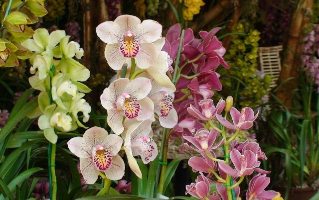 festiwal kwiatów w Gangtoku