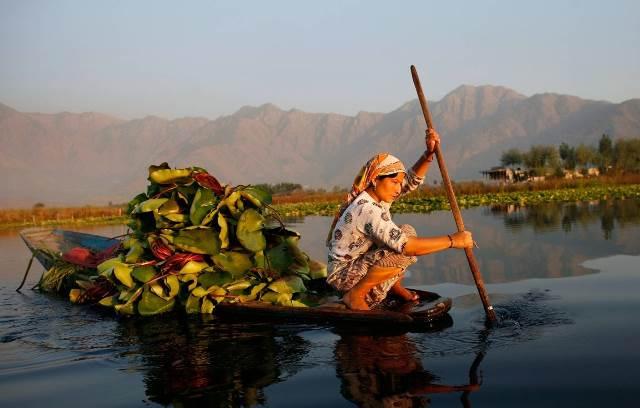 Na jeziorze Dal - Srinagar