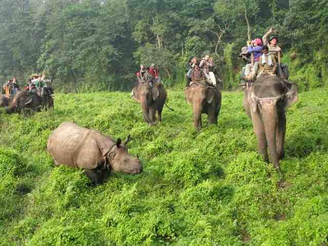 Safari na słoniu w Parku narodowym Chitwan
